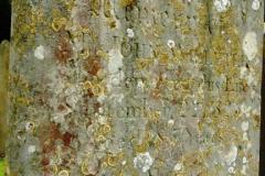 John Willeter 1741 grave